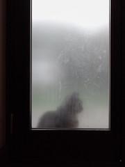 Il gatto è forse il solo animale che conosca la noia umana. (Tommaso Landolfi) (Alberto Cameroni) Tags: gatto citazione tommasolandolfi leicaxtyp113