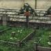 Austro-Hungarian cemetery in Peio