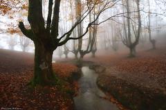 The Soul of the Autumn (Hector Prada) Tags: autumn otoño forest bosque fog niebla river rio leaves hojas tree árbol mood atmósfera enchanted encantado golden naturaleza nature paísvasco basquecountry