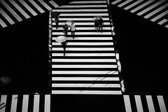 crosswalks (reiko_robinami) Tags: street streetphotography crosswalk rain urban umbrella outdoors monochrome blackandwhite tokyo japan