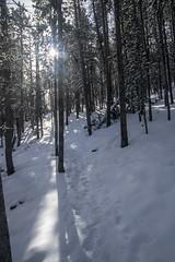 Through The Trees (noname_clark) Tags: rockymountainnationalpark outdoor hike snow lillymountain tree sun flare