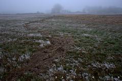 Wasserstand Sturmflut Zeetje (baltickiter) Tags: ostsee natur nebel nikond5100 wasser vögel strand salzhaff