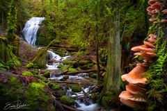 Coal Creek Falls Mushroom Discovery (Erwin Buske Photography) Tags: coalcreekfalls fungi fungus waterfall cougarmountain