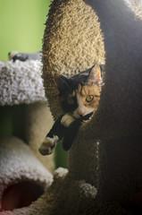 2019 13/365 (JacqCarbajal) Tags: 365 nikond5100 photoshopcs6 35mm cat kitty kitten calico lensflare
