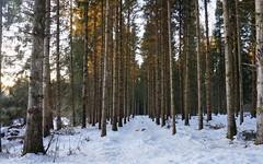 Le chemin... (passionpapillon) Tags: paysage landscape neige arbre forêt snow hiver winter forest tree régionauvergnerhônealpes champdorcorcelles ain france passionpapillon2019