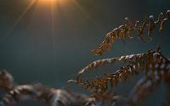 tenderness (Emma Varley) Tags: light sun sunset rays bracken fern memories friends mood tender woodland nature wintersun