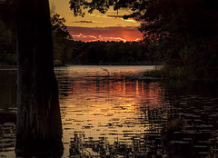 A Beautiful Ending (Wes Iversen) Tags: clichesaturday hcs heronlake holly hollystaterecreationarea michigan nikkor24120mm clouds lakes nature reflections ripples sunset sunsets trees water