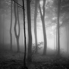 Deep in the forest X (ilias varelas) Tags: dark fog forest blackandwhite nature light landscape mood mono monochrome mist atmosphere square greece woods