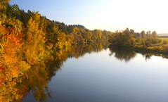 LakeRiver (Team Hymas) Tags: gold green ridgefieldnationalwildliferefuge washington