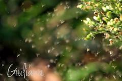 It'a a kind of magic (° Giuliana *) Tags: magic magia nature natura natural flower flowers floreal fiore fiori garden autumn autunno green verde bokeh bokeheffect photography photo iphoneography fotografia foglia forest foresta foto love lovely fun