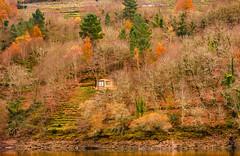 terrazas en otoño (mercedescasal) Tags: riverasacra otoño rio galicia terrazasvid colores