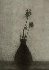 forgotten (2017) (Alexander Tkachev) Tags: alternativephotography altprocess bromoil blackwhite canoneoselan7 fomabrom123 stilllife alexandertkachev