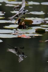 DSCF6248 (jojotaikoyaro) Tags: bird animal nature wildlife suginami tokyo japan fujifilm xh1 xf100400mm