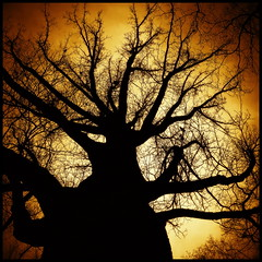 magical tree (luci_smid) Tags: tree silhouette treetop light contrast mystery outline branches impression