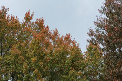 Overcast Sky (Modkuse) Tags: classicchrome nature natural sky autumn fallcolors trees fujifilm fujifilmxt2 xt2 xf1855mmf284rlmois fujinon fujinonxf1855mmf284rlmois photoart art artphotography fineartphotography fineart
