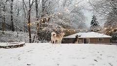 20181116_164717 (LifeIsForEnjoying) Tags: nike kaskae backyard snow