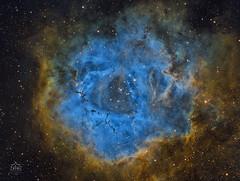 NGC 2237 - Rosette Nebula - Hubble Palette (ZENIT Observatory) Tags: zenit observatory osservatorio ladispoli roma telescop telescopio esprit refractor rifrattore 10micron ccd gm1000 moravian hps sky g2 deep 8300 nebula ngc2237 rosette rosetta astrodon hso hubble palette narrow sho