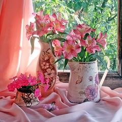 Ах, лето! (lvv1937) Tags: цветы ваза кувшин окно мыизяфа натюрморт exploré explore classicstilllifeart stilllifemypassion stilllife фотовыпускниковяфавexploreнаflickrgraduatesofyandexfotkiinexplore inexplore