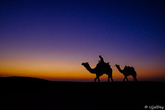 Way back home (ujjal dey) Tags: ujjal ujjaldey thor desert rajasthan jaisalmer sam dune dusk sunset evening silhouette fujifilm xe2s camel colors sky travel india
