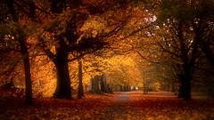 The way ... (Julie Greg) Tags: way autumn autumn2018 tree trees colours canon park kent england leafs leaf light