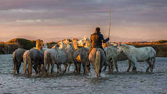 Camargue (Michèle Aime Escudero) Tags: camargue aiguesmortes chevaux people animal