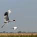 A heron, a crane, an egret