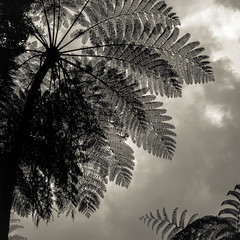 Kebun Raya Cibodas-6 (Regina Brigitta) Tags: kebunrayacibodas cipanas indonesia kebunraya hitamputih blackandwhite bnw ngc cloud awan pohon tree leaves nature naturephotograhy alam