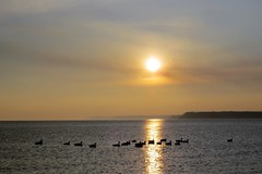 Port Dover. (Gillian Floyd Photography) Tags: port dover ontario canada geese silhouette lake sunset