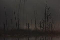 Hintergrundbeleuchtung (IIIfbIII) Tags: landschaftsfotografie landscapephotography landscape mv mecklenburgvorpommern canonphotography licht sunlight wood trees lake water wandern see wasser morgenlicht morning herbst autumn