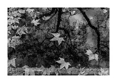 Bloomsbury Gutter in Winter © (wpnewington) Tags: london reflection gutter leaves rain winter bloomsbury bw monochrome