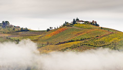 A vineyard in the sky (paolo_barbarini) Tags: paesaggio landscape nature vineyard vigneti piemonte italia italy piedmont autumn colors sky cielo nuvole clouds countryside campagna