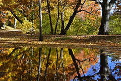 The Riverway Park in Fall, Boston (2576) (mamieli2016) Tags: newengland fallcolors autumnmorning autumncolors boston theriverwaypark fall autumn trees reflection puddles