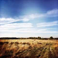 Molenveld (Jos Mecklenfeld) Tags: heath heide nederland niederlande netherland drenthe exloo molenveld hipstamatic landscapes nature