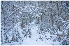 First Light 2019 (D J England) Tags: djenglandphotography sigma24105mmf4dgoshsma douglasjengland dje canoneos5dmkiii southernontario djengland ontario tobermory brucepeninsula
