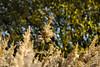 Backlight reeds