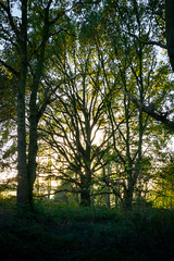Branching out (ArrrV) Tags: orwell country park trees nature autumn foliage plants wildlife pipers vale nikon d3300
