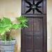 Galle - Door with Plant