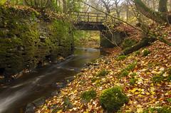Beck (Phil_Mercer) Tags: leaves river water bridge flowing autumn skipton yorkshire