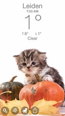 Zaterdag 17 november 2018 (gill4kleuren - 20 ml views) Tags: cat mouse moments kat pet animal pussycat pussy poezen poes hair eyes little puss jong young katze chat minou mieze gata gato gatta katje gatto kitty kater photo weer weather day kiity cloudy storm wind rain forcast humidity visibility colors yoga bad sky