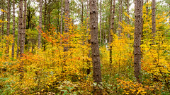 When it was worn (Wicked Dark Photography) Tags: landscape wisconsin autumn fall foliage forest nature trees woods