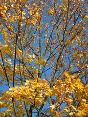 branches and leaves (cloversun19) Tags: rain animal field grass landscape branches leafs foliage sky russia russian spb tree walking country holiday holidays park garden dream dreams positive forest happy view grey legend fairytale fir firtree birch village evening romantic october september car road street blue maple leaves town city light sun yellow autumn trees leaf