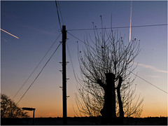 Day 338 Sky lines (Dominic@Caterham) Tags: winter sunrise sky tree planes vapour wires telegraphpole lamppsot twigs communications cloud