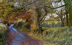 The lane in autumn (Jean Fry) Tags: dartmoor dartmoornationalpark devon englanduk nationalparks portlandlane roads sheepstor sheepstorvillage trees uk westcountry autumn autumncolours narrowroads