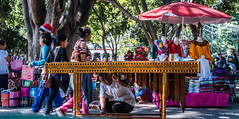 2018 - Mexico - Oaxaca - Xylophonist (Ted's photos - Returns late Feb) Tags: 2018 cropped mexico nikon nikond750 nikonfx oaxaca tedmcgrath tedsphotos tedsphotosmexico vignetting xylophone zocalo oaxacazocalo musician musicalinstrument umbrella wideangle widescreen