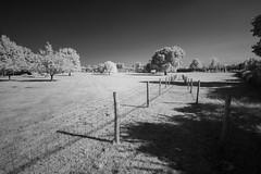 Light & Shadow (Future-Echoes) Tags: 4star 2018 bw blackandwhite essex fence infrared light path shadow trees wickhambishops tokina1116mmf28 tokina