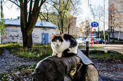 Homeless cat basking on the paratrasse in Russia (ivan_volchek) Tags: cat animal pet kitten white cute feline domestic kitty nature mammal fur pets outdoor young grass portrait eyes black green beautiful blue cats day street sunny homeless animals blur city closeup ears furry grey helloapril look russia mustache nose one