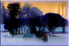 El parque (seguicollar) Tags: imagencreativa photomanipulación art arte artecreativo artedigital virginiaseguí ddg parque árboles banco
