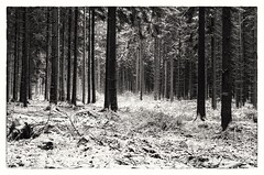 In Between (Tom Levold (www.levold.de/photosphere)) Tags: bw köln königsforst forest wald d7000 nikon bäume wood snow trees sw schnee cologne