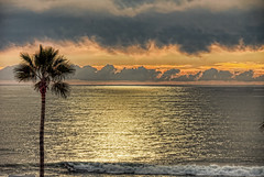 Lone Palm 6-1-13-19 (rod1691) Tags: clouds sunset rainy ocean oceanside california palm reflection