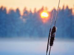 Winter sunset. (jezziks) Tags: sunset sundown lake nature omd mft olympus bokeh 40150mm
